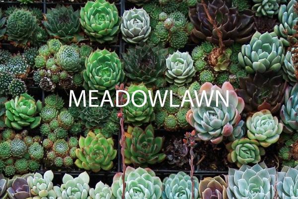 Meadowlaw